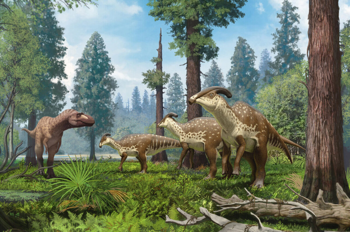 Life reconstruction of Parasaurolophus group being confronted by a tyrannosaurid in the subtropical forests of New Mexico 75 million years ago. Credit: Copyright Andrey Atuchin, Denver Museum of Nature & Science.
