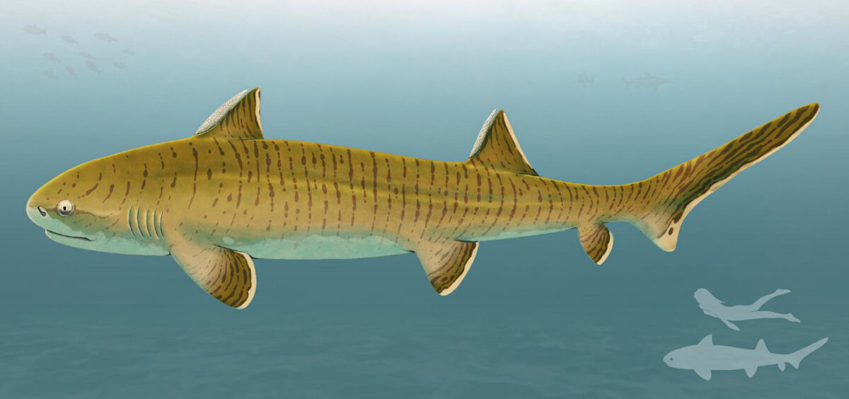 150 million-year-old shark was one of the largest of its time