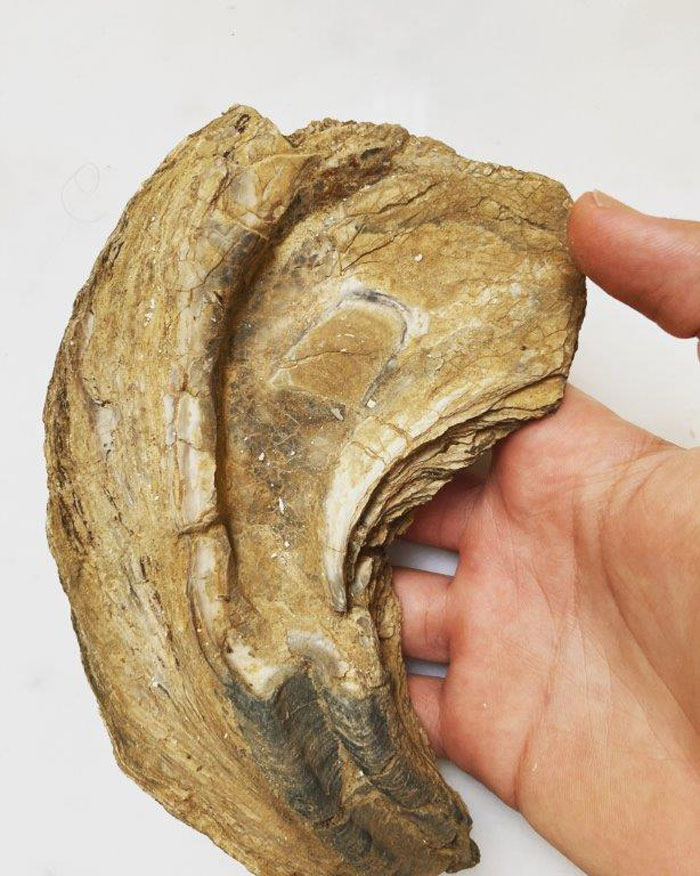 The findings mainly concern the Pleistocene period and come from both marine and lake environments.