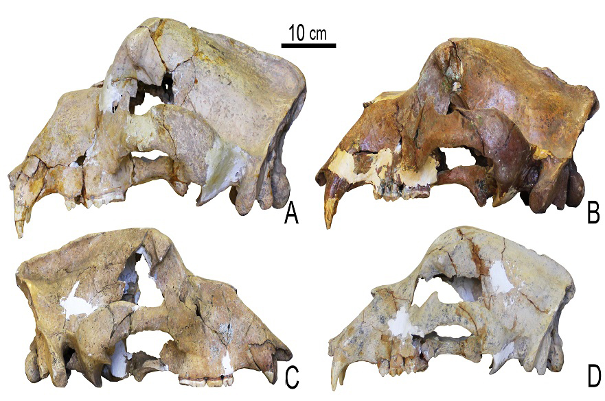 Oldest non-permafrost genome and a new history for extinct cave bear