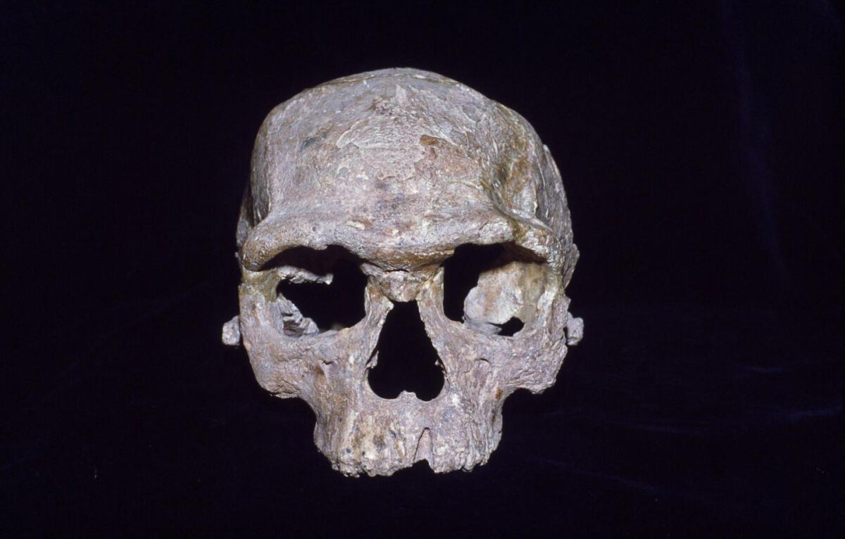 This cranium from Jebel Irhoud in Morocco is often called a modern human ancestor. The meaning of that ancestry is discussed and disentangled in a new study by Bergstrom and colleagues. Credit : Chris Stringer