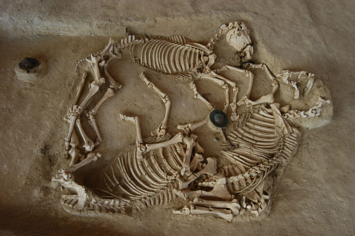 Burial of three horses at Mikri Doxipara-Zoni (photo: AMNA / Evros Ephorate of Antiquities , Domna Terzopoulou)