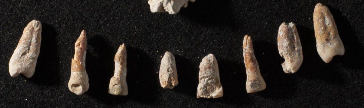 Teeth with dental inlays from a nonroyal elite Mayan tomb. Credit : Kenichiro Tsukamoto