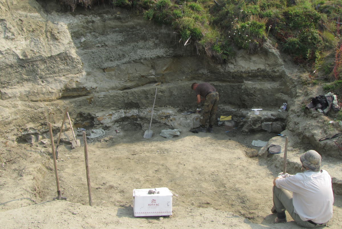Scientists examine more than 60 teeth of stegosaurs from Yakutia