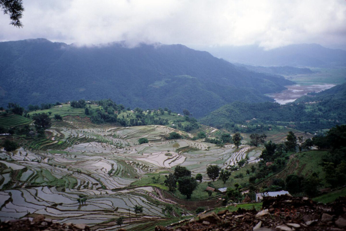 Terraced rice landscapes near Pokhara, Nepal. Credit : Erle Ellis