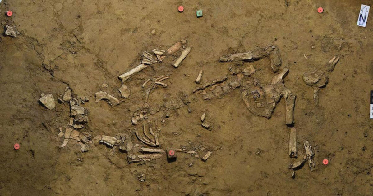 The Early Bronze Age female burial as found. The green pin (top center) marks the place the gold spiral was uncovered. Credit: University of Tübingen