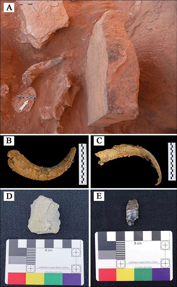 Artefacts recovered during excavation and ground survey: A) cattle horn positioned in front of a betyl at IDIHA-F-0011081; B–C) cattle horns recovered from IDIHA-F-0011081; D) Neolithic micro core collected from IDIHA-F-0003301; E) Neolithic bifacial foliate identified at IDIHA-F-0011394. Credit: Hugh Thomas et al. 2021
