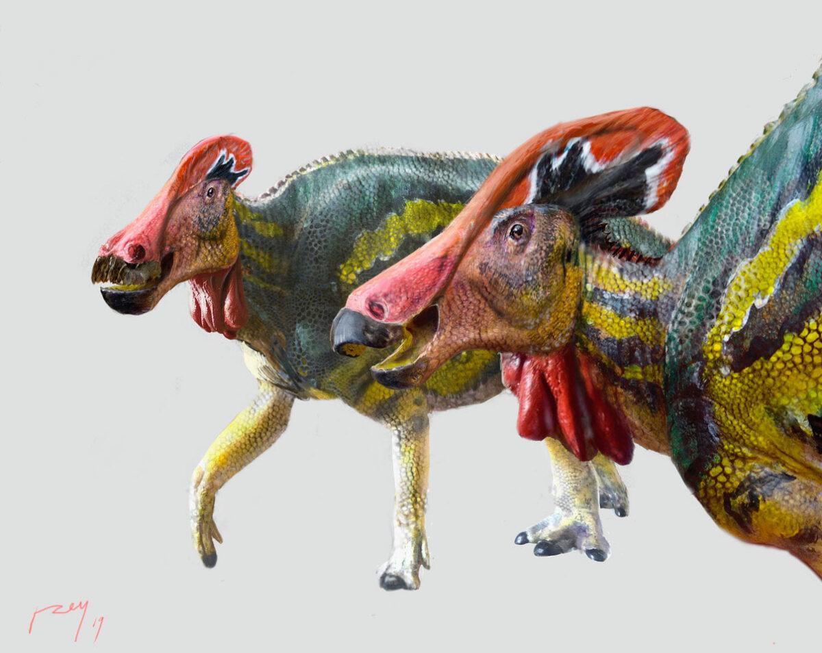 Tlatolophus galorum, the new species of dinosaur (photo: INAH / Luis V. Rey).