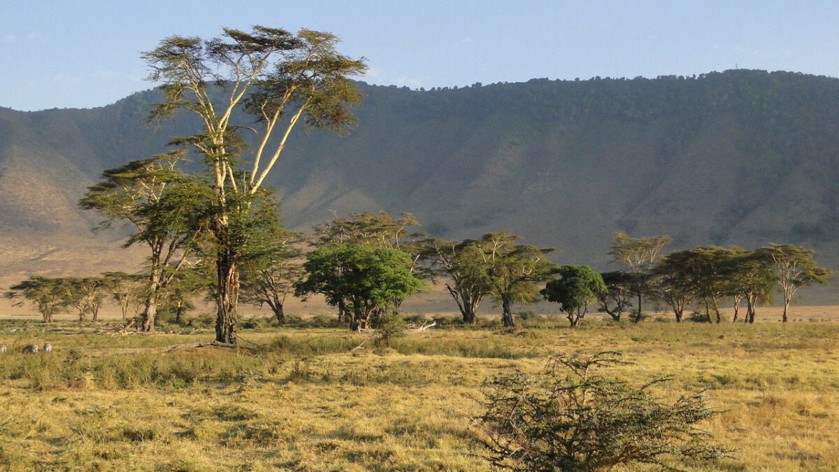 The Ngorongoro on the edge of the Serengeti in Tanzania is home to abundant wildlife. Climate change, however, leads to dramatic water scarcity, vegetation changes, loss of biodiversity and recurring diseases that threaten the fragile ecosystem. © Prof. Martin Trauth, University of Potsdam