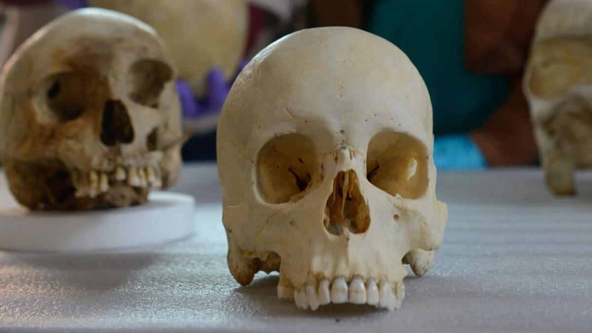 Skulls in the lab of Ann Ross at NC State University. Ross is a biological anthropologist and forensic science researcher. Credit : Marc Hall, NC State University