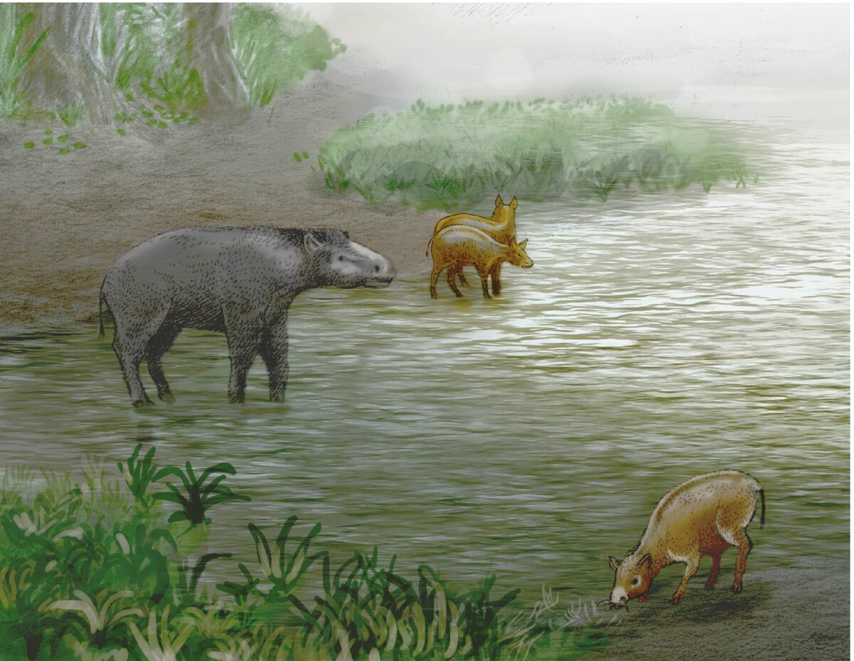 Detail of the margin of Lake Zambrana (Álava) from 37 million years ago. On the left the new species of paleoterid 'Leptolophuscostiai' and in the center and on the right another equoid perissodactyl, 'Pachynolophus zambranensis', also defined for the first time in the Alava paleontological enclave. Paleoillustration: Ulises Martínez Cabrera.