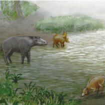 New species of pseudo-horses living 37 million years ago
