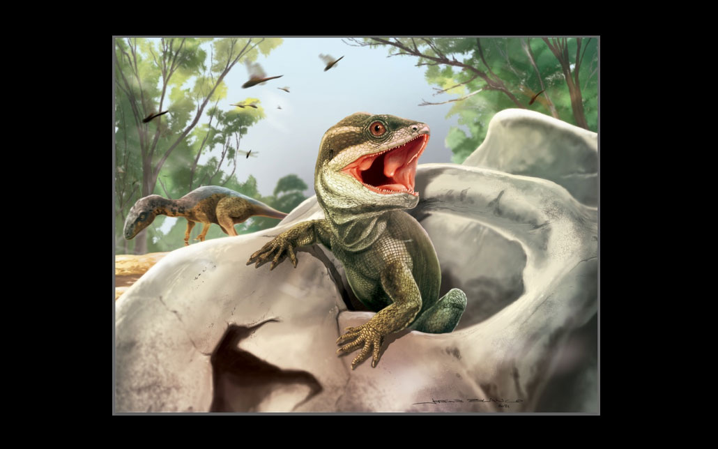 Life reconstruction of Taytalura in its natural habitat with the extinct conifer Rhexoxylon in Ischigualasto (Argentina) during the Late Triassic, hiding from the primitive dinosaur Eodromaeus (in the background) inside the skull of a mammalian ancestor. Credit: Original artwork created by scientific illustrator Jorge Blanco.