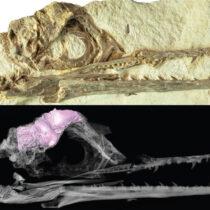Bird Brains Left Other Dinosaurs Behind