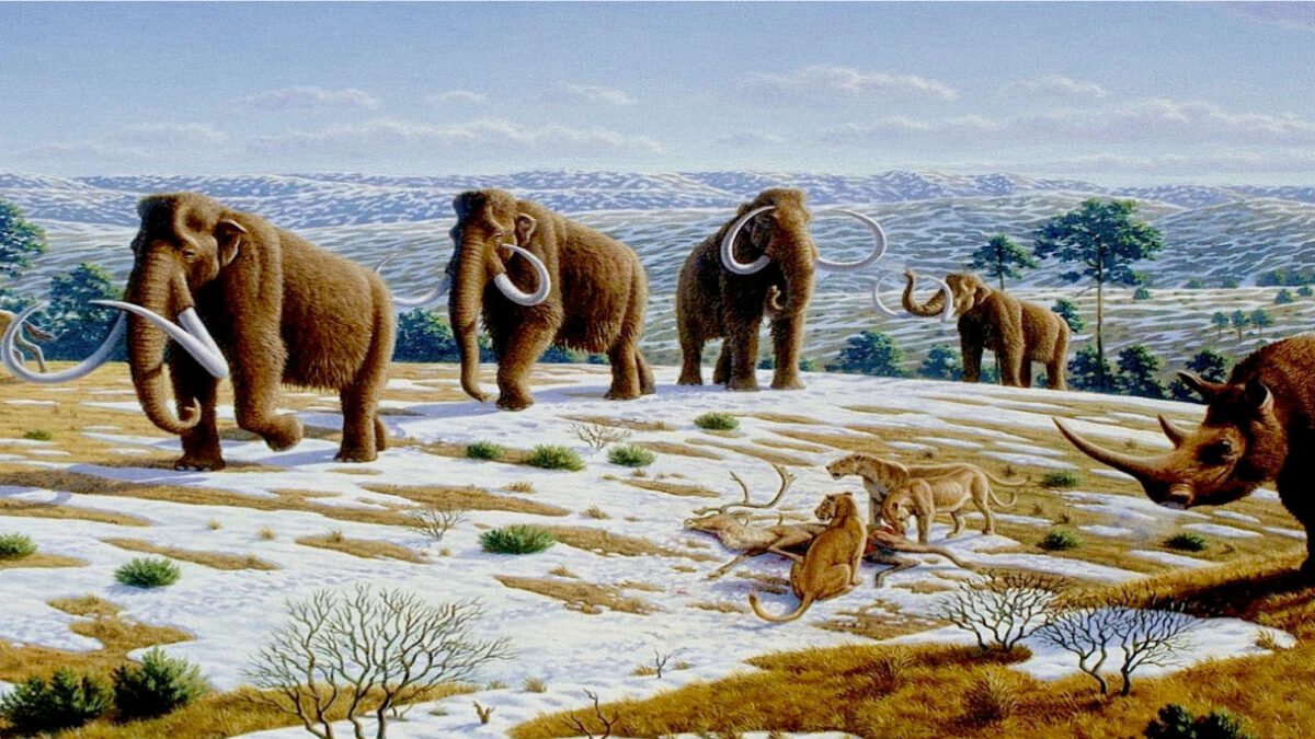 Mammoths could