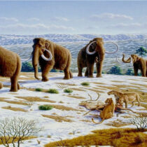 Biotechnology Company wants to recreate woolly mammoths