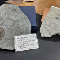 Rethymnon will acquire its Museum of Fossils
