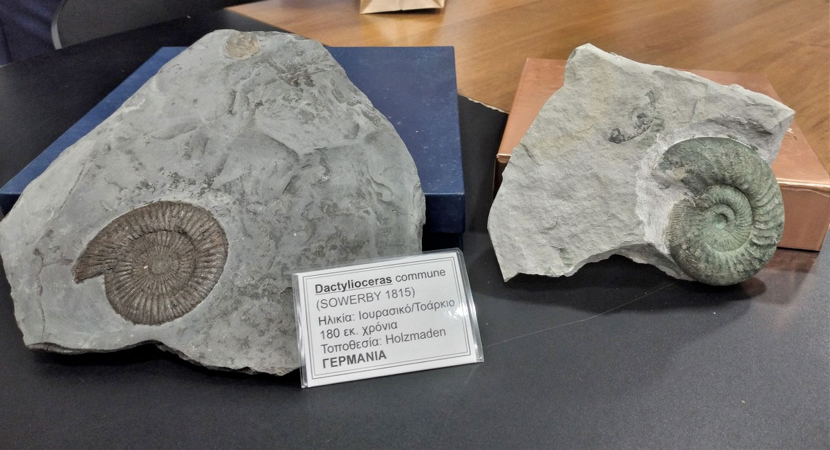 Rare 180 million year old fossils donated by Paschalis Zisiou (photo: Municipality of Rethymnon)