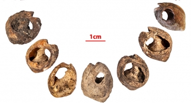 The beads uncovered by Kuhn and his collaborators were made from sea snail shells, and each measures roughly half an inch long. Credit: Abdeljalil Bouzouggar