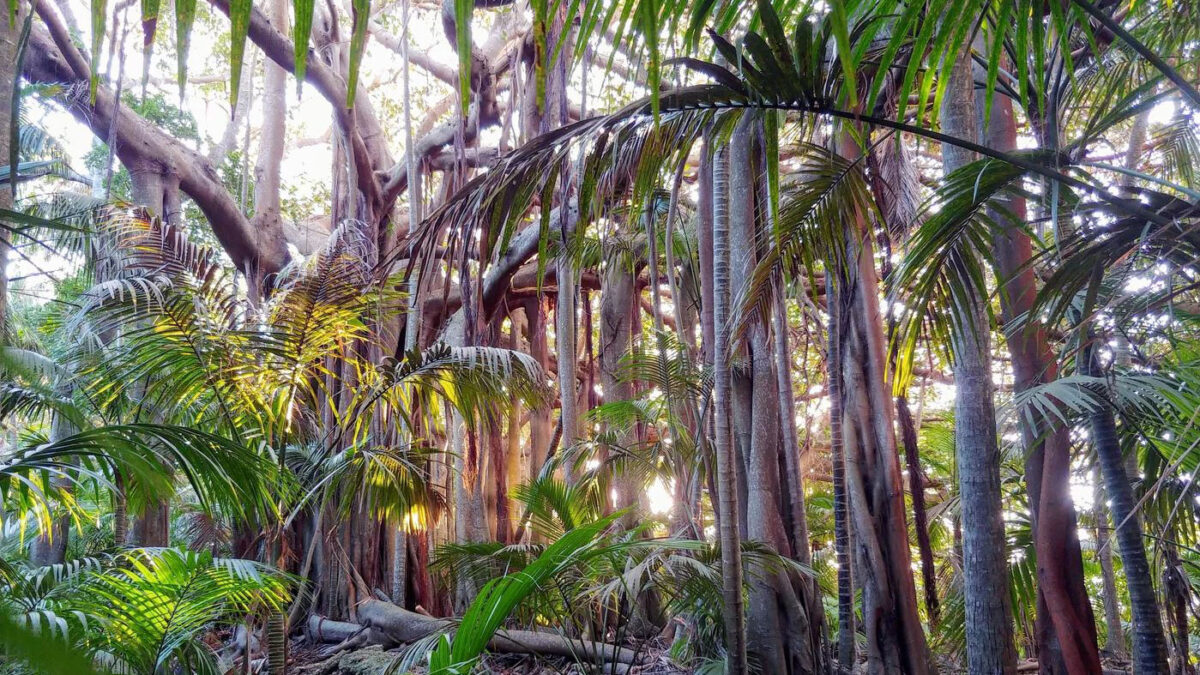 Tropical forests represent some of the most threatened land-based habitats on the planet. © R. Hamilton