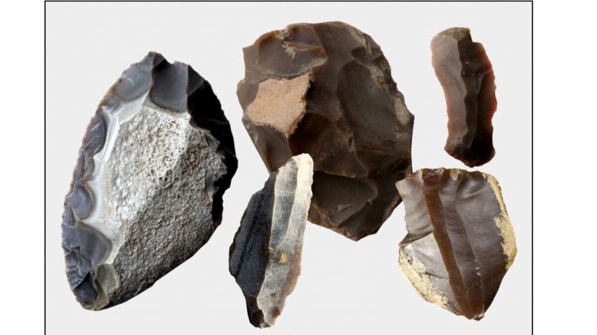 The quality of chocolate flint was appreciated by prehistoric communities from the Middle Palaeolithic, through the Mesolithic and Neolithic, to the Iron Age (from about 250,000 years ago to the turn of the era), and it enjoyed the greatest popularity in the Upper Palaeolithic (15-12,000 years ago). Photo : Magdalena Sudoł-Procyk